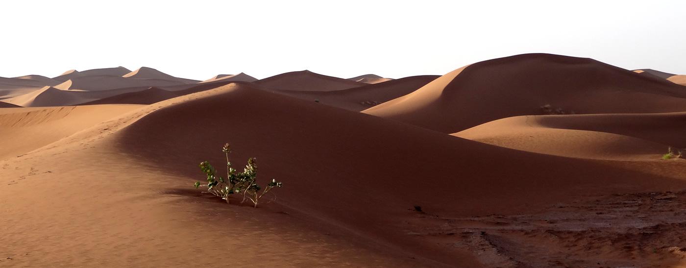 sahara_feeling_tour_marokko_06
