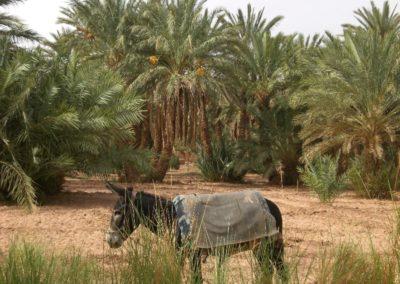 sahara_marokko_desert_tour044