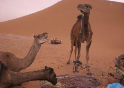 sahara_marokko_desert_tour046
