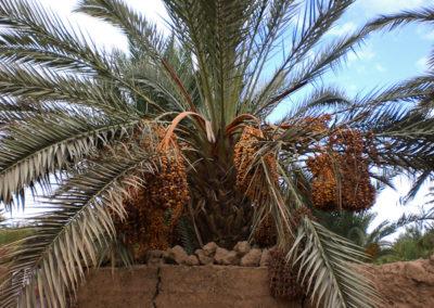 sahara_marokko_desert_tour054