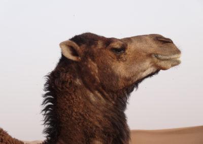 sahara_marokko_desert_tour079