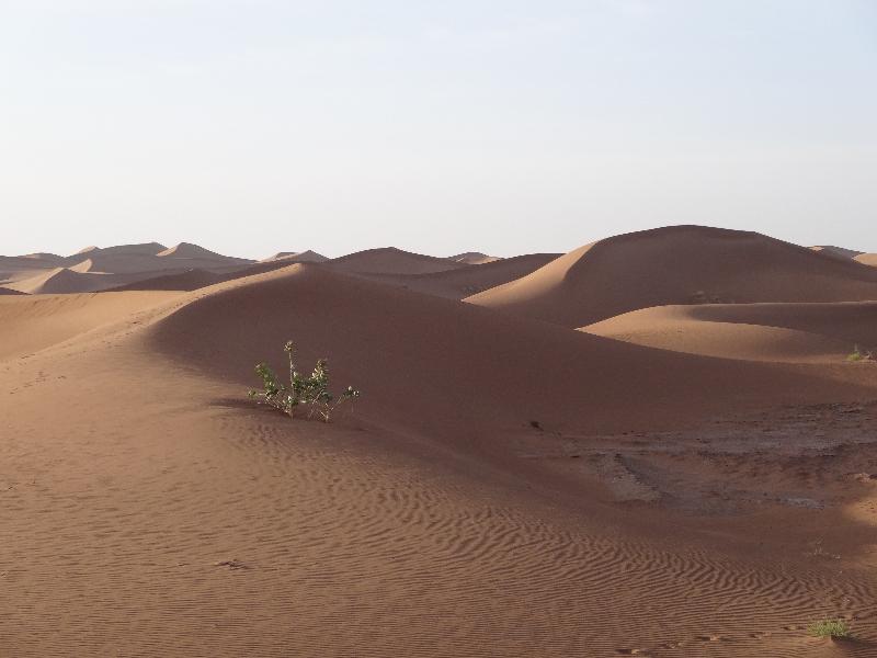 sahara_marokko_desert_tour081
