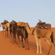 sahara_marokko_desert_tour088