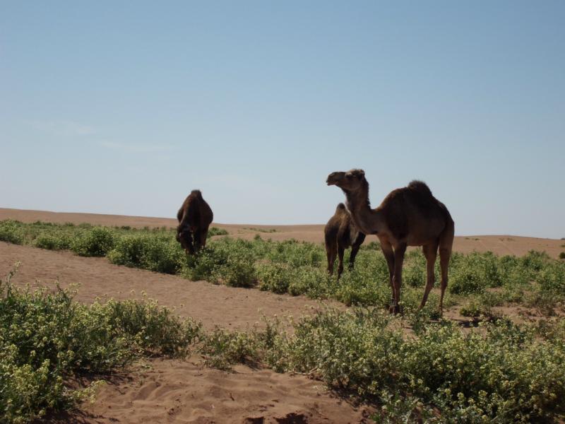 sahara_marokko_desert_tour116