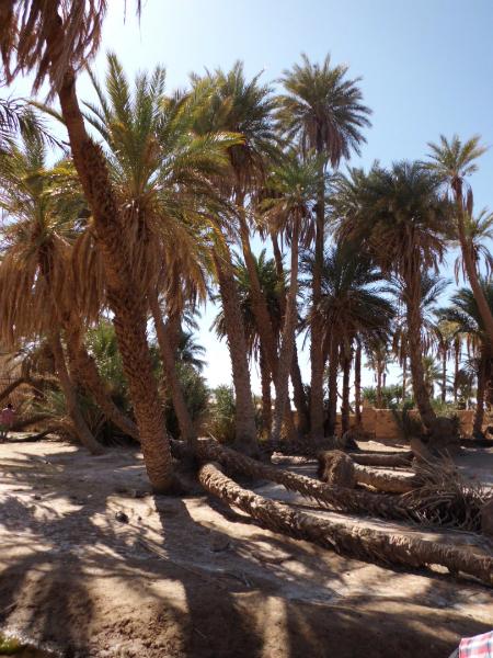 sahara_marokko_desert_tour117