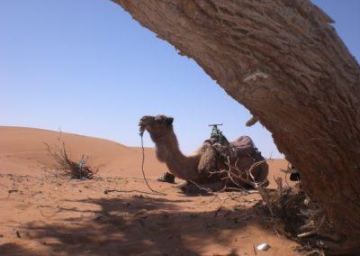 sahara_marokko_desert_tour127