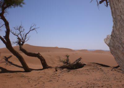 sahara_marokko_desert_tour130
