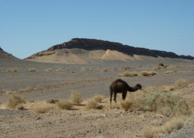 sahara_marokko_desert_tour164