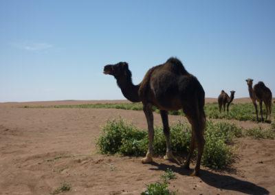 sahara_marokko_desert_tour165