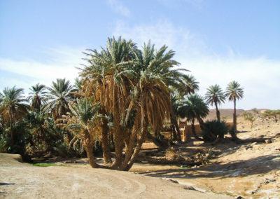 sahara_marokko_desert_tour173