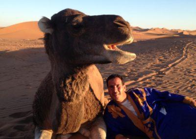 sahara_feeling_camel