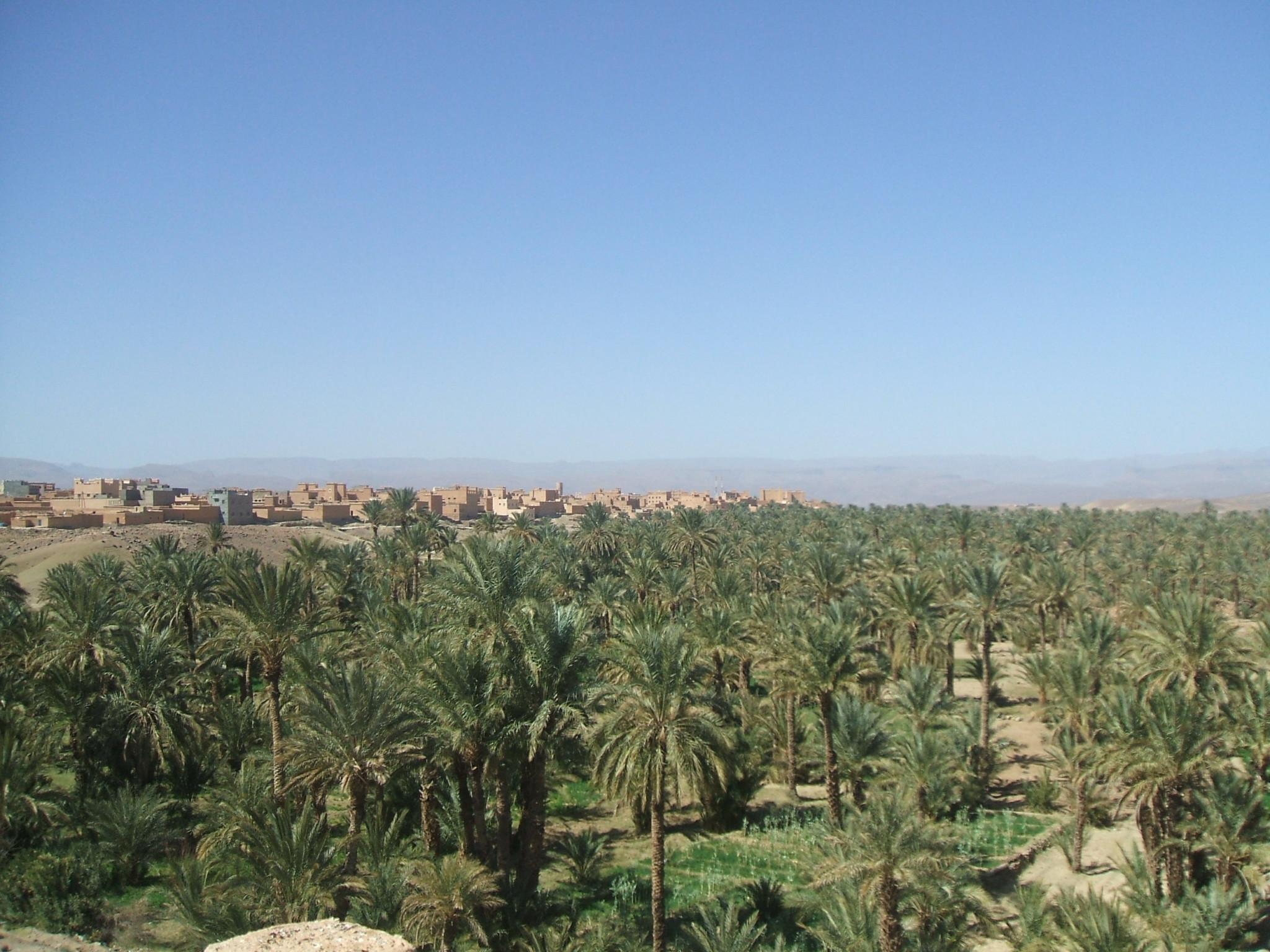 Habibi febb.2011 005