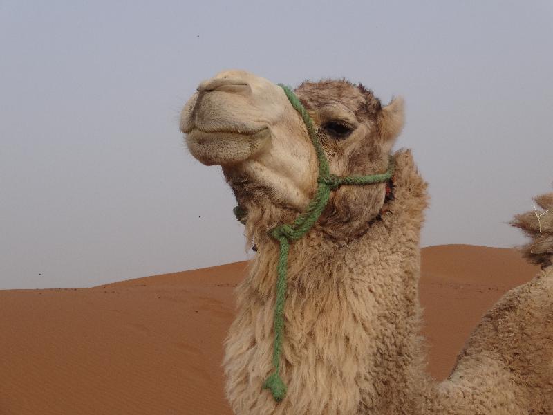Moroccan Desert Tours | Sahara Feeling