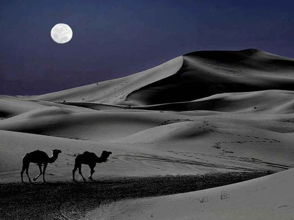 Sahara Desert Custom Tour Groups