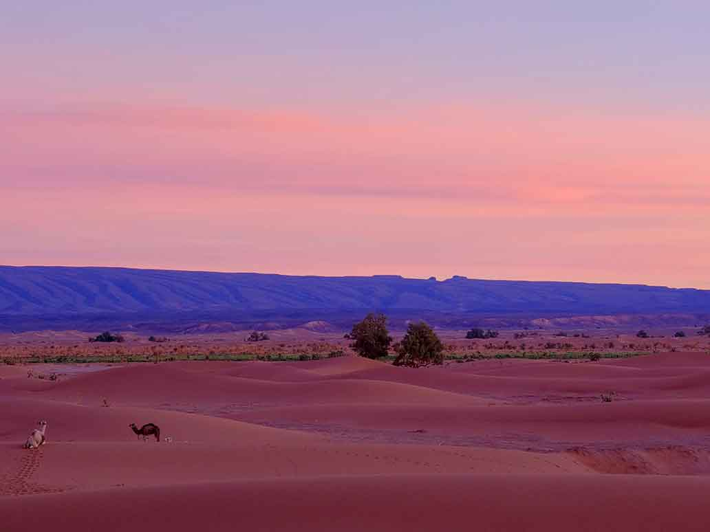 Sahara Desert at Night | Custom Tour Groups in Africa